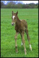 Un nouveau zoutils : le cheval