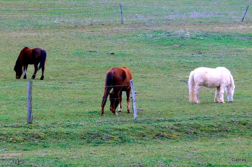 Rabastens: les chevaux du centre équestre