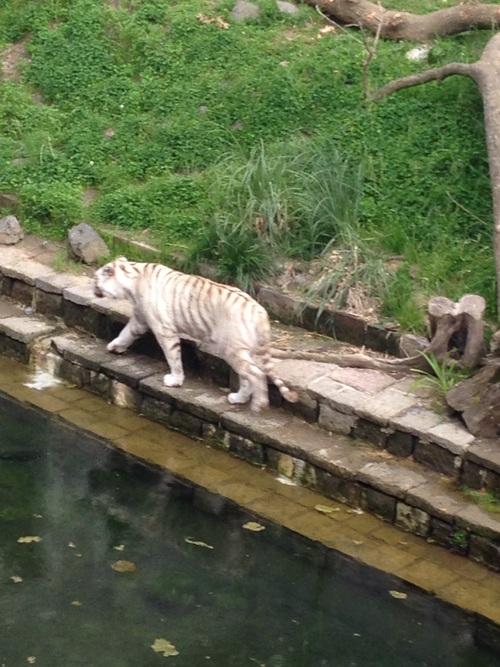 """Suite ..parc zoologique 'Domaine de Cambron 'Belgique """""""