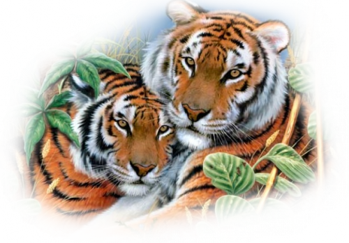tubes wild cats