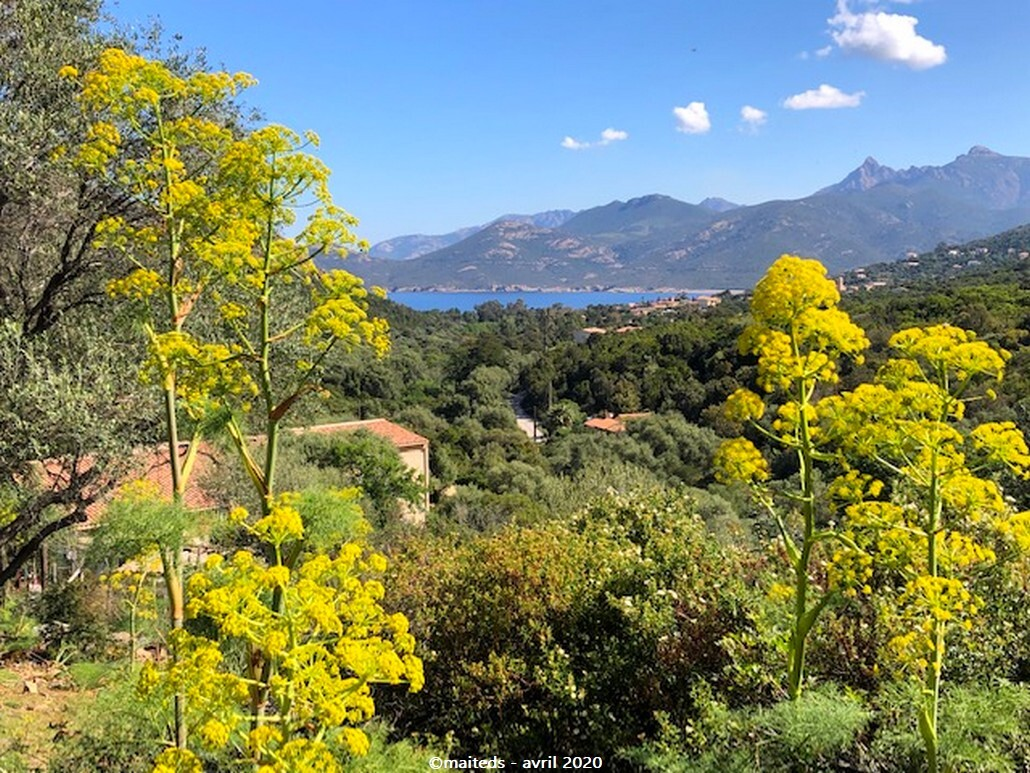 Vue sur le village de Galéria depuis le hameau de Calca