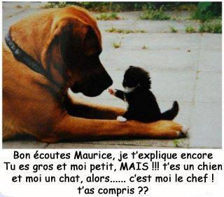 chienchat