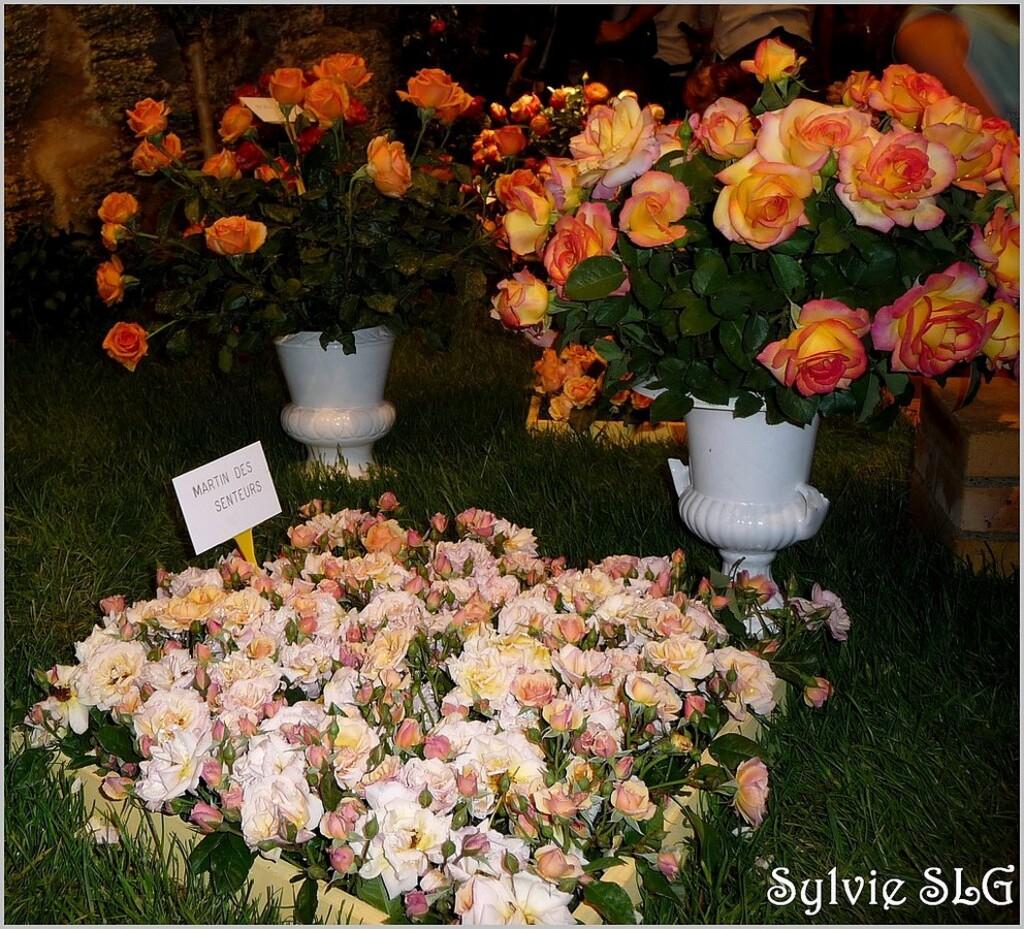 Journées de la RoseChaque école doit présenter, dans une immense grotte, un véritable grand décor naturel, à base de roses sur un thème précis, renouvelé chaque année.