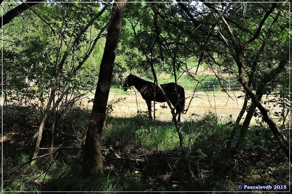 Les étangs de Monsalut - Début Août 2015 - 1/7