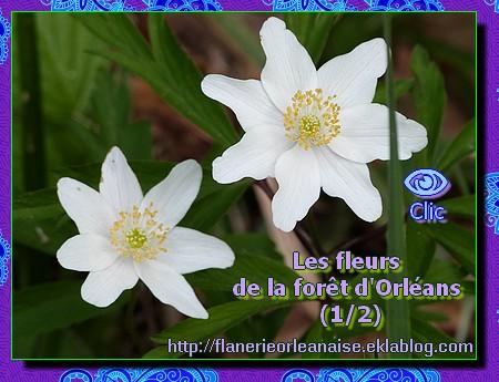 Les fleurs de la forêt (1/2)