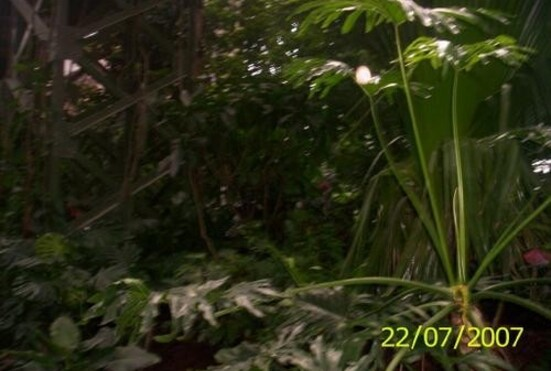 aserre-14jpg-.jpg