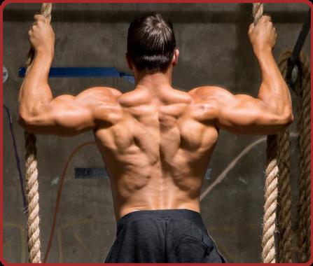 Que Des Muscles.