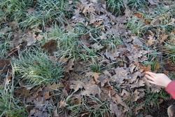 La nature en hiver