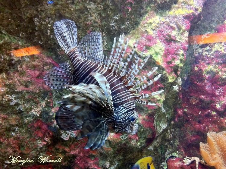 Lyon aquarium : Généralités