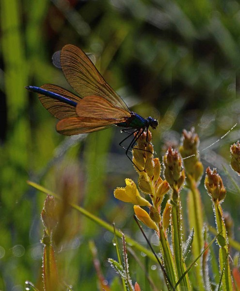 Insectes-papillons--4-7863_modifie-1.jpg