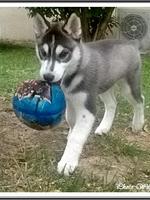 Leïka (2,5 mois)