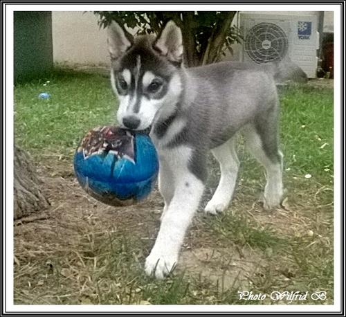 Les joujous des p'tits loups (27 septembre 2015)
