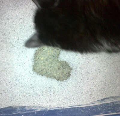 Wolu1200 : Mon chat devient fou !