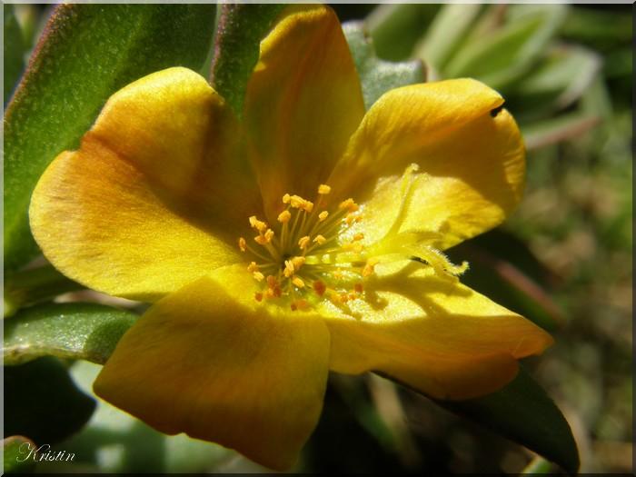 Inconnue jaune