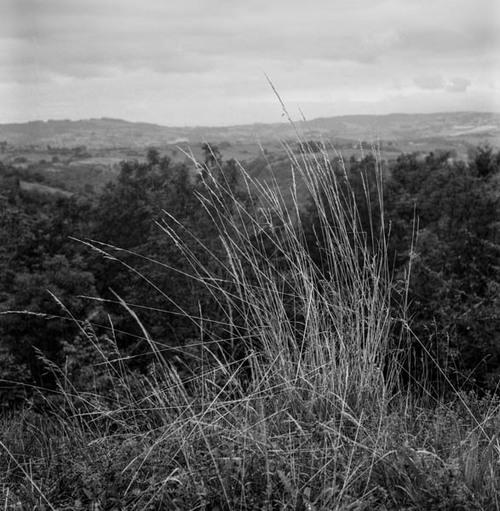 - Les herbes folles