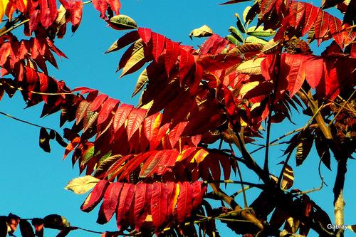 Feuillages d'automne!