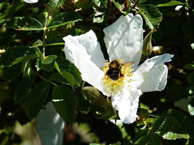 Les insectes de Metz - 3 mp13 2010