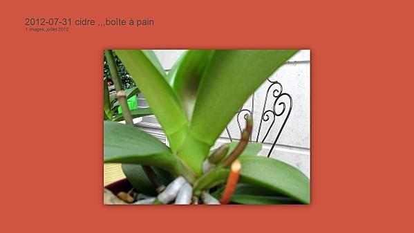 2012-07-31-cidre----boite-a-pain5.jpg