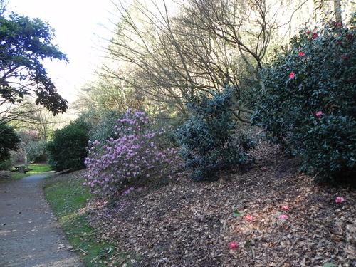 Fevrier 2013 au Parc Botanique de Brest