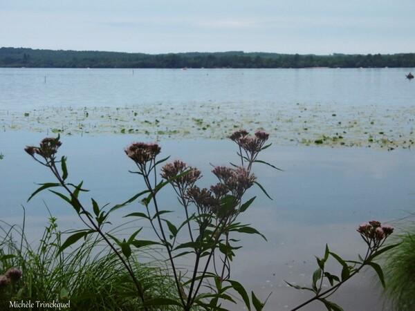 """Une balade """"au bout de ma rue""""... au Lac de LEON (40), le 5 août (suite)..."""