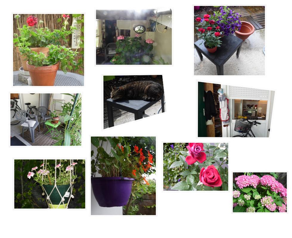 Dans mon jardinet ...