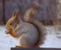 Blog de lisezmoi :Hello! Bienvenue sur mon blog!, L'écureuil