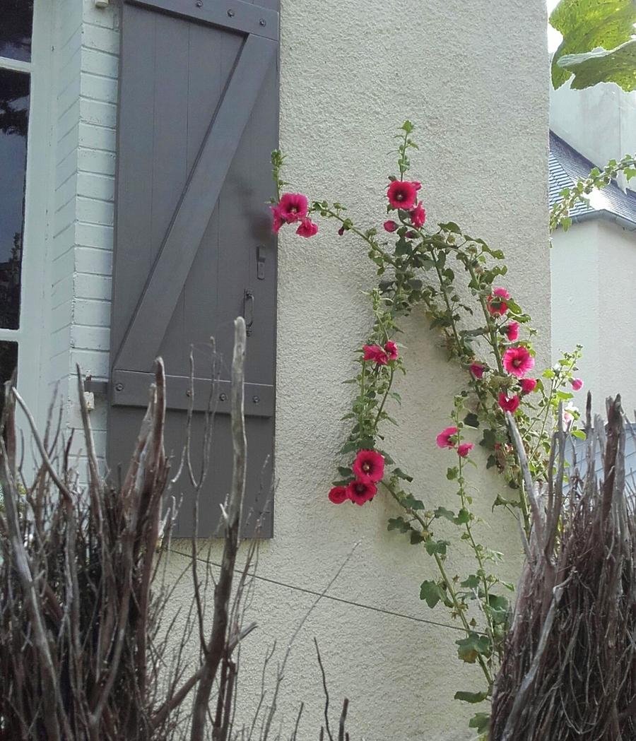 Rideau  fleuri