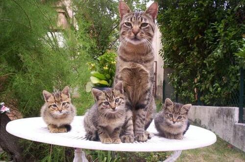 Les animaux et leurs bébés !