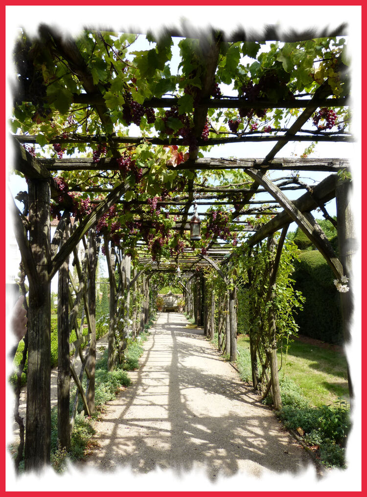 Dans le Jardin de Thiré ( 85 )..