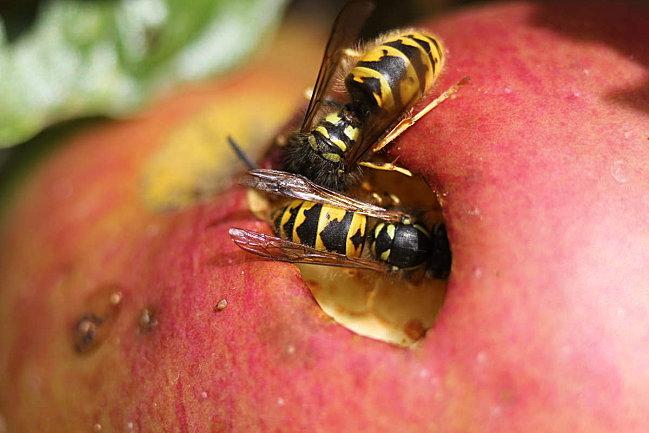 macros-insectes 3548 3615