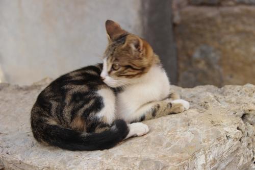 Les chats à Éphèse