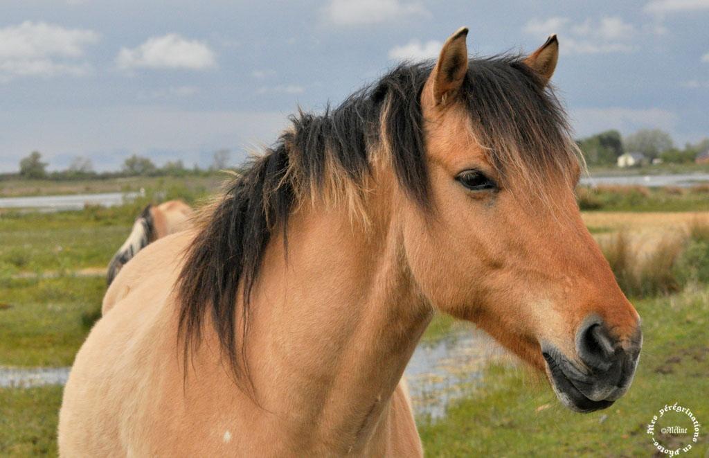 Quelques chevaux près de chez nous!