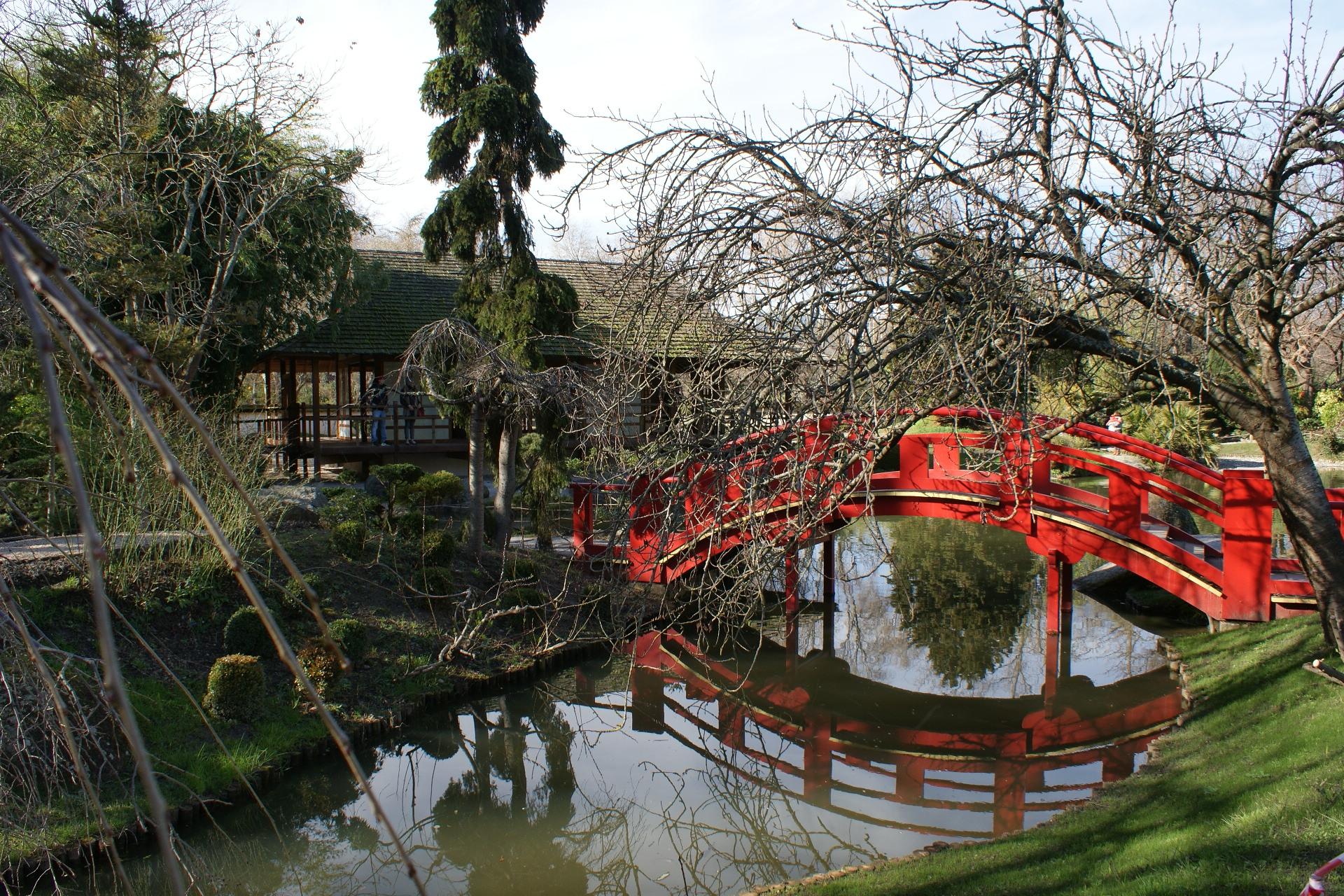 Jardin japonais ma ville rose for Arbuste jardin japonais