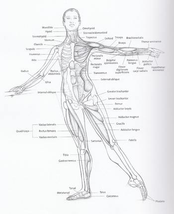 dancers anatomy 1