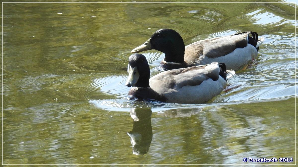Printemps à la Réserve ornitho du Teich - Avril 2016 - 2/12
