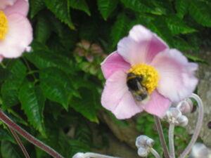 Fleurs_du_jardin_021