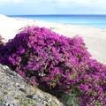 Les canaries - Fuerteventura - 2