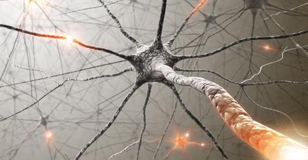 Les axones ont pu repousser grâce à l'approche utilisée par les chercheurs