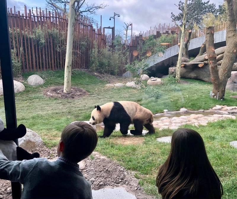 Encore les deux pandas