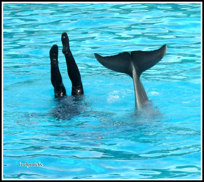 Spectacle de dauphins.