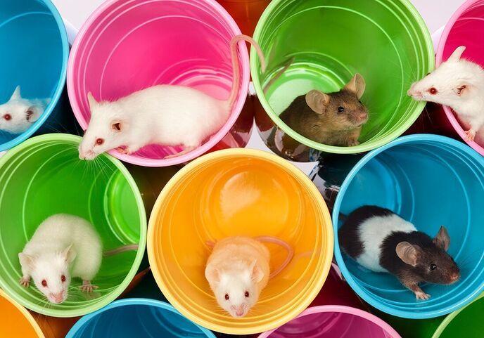 Rêver de rat ou de souris : signification du rongeur dans un rêve ...