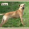 Nina B 2