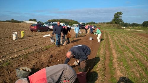 La récolte des pommes de terre pour la chapelle Saint Maur