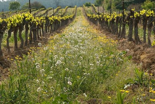 Le vigneron (1)