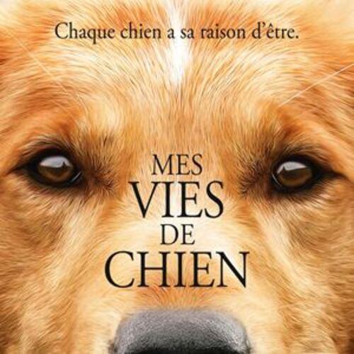 """""""Mes vies de chien"""" un film/livre drôle, tendre et émouvant : 19.5/20"""