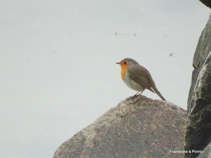 Echouage de Vélelles et Oiseaux de la Tara