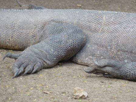la croisière à Komodo
