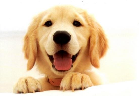 chiens 5212