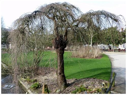 Quelques arbres prestigieux du jardin
