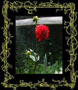 balade au jardin et Jardiner avec la lune du 16 au 31 juillet